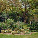Ботанический сад Эйн Геди