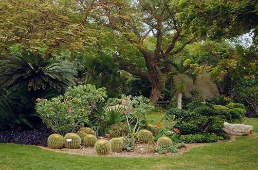 Ботанический сад Эйн-Геди - оазис в пустыне