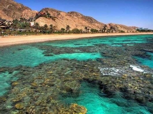 Коралловые рифы Эйлатского залива