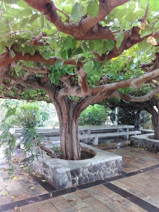 Территория православного храма 12 Апостолов  в Капернауме