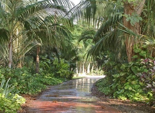 Тенелюбивые растения в ботаническом саду Эйн-Геди