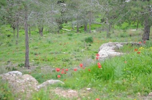 Пешком по Израилю